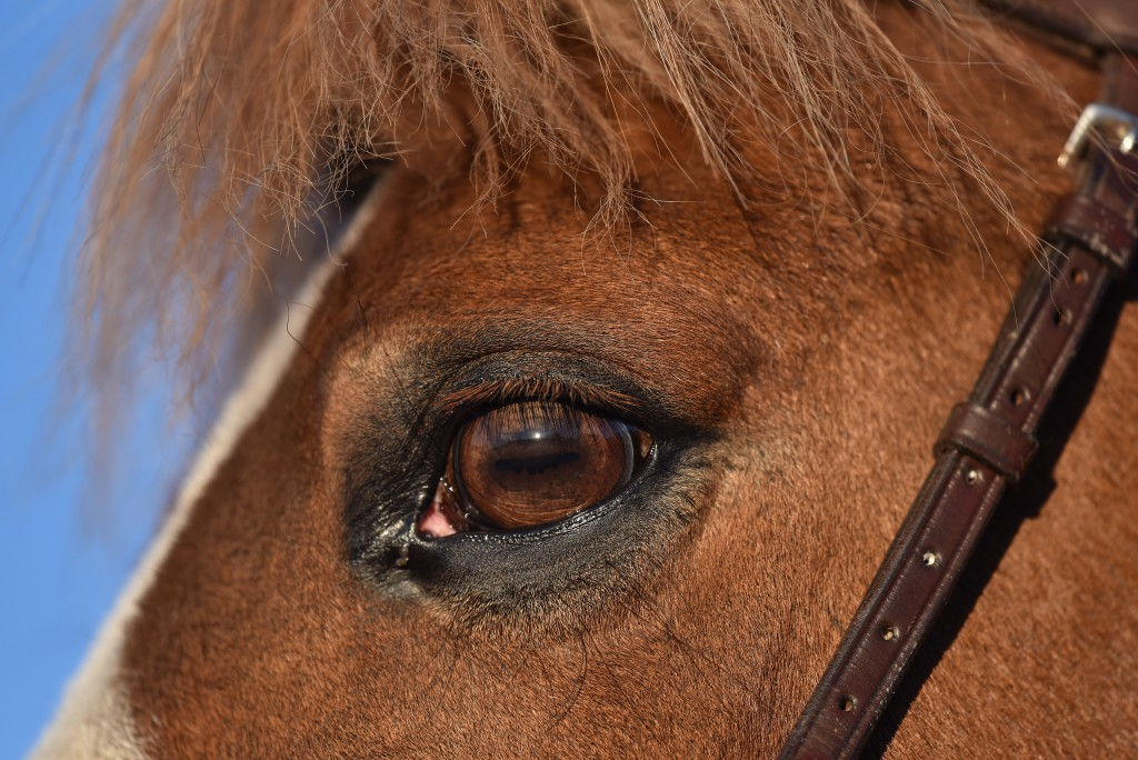Jacks vackra öga!