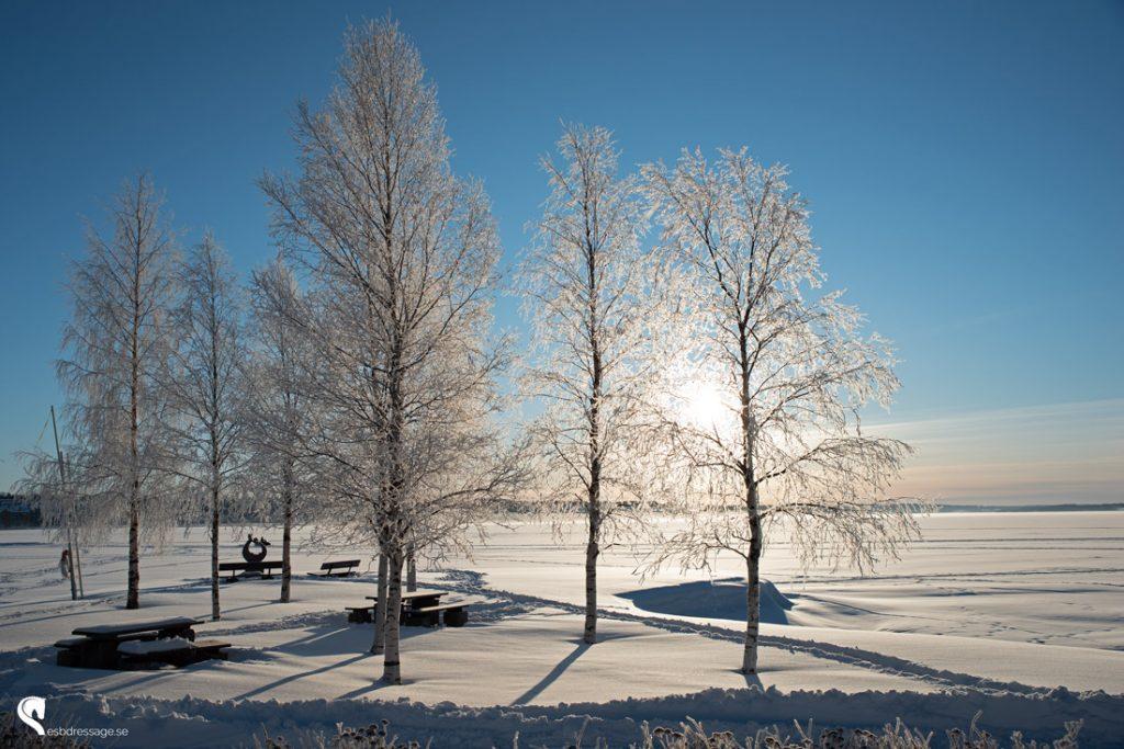 Vacker vinterdag!